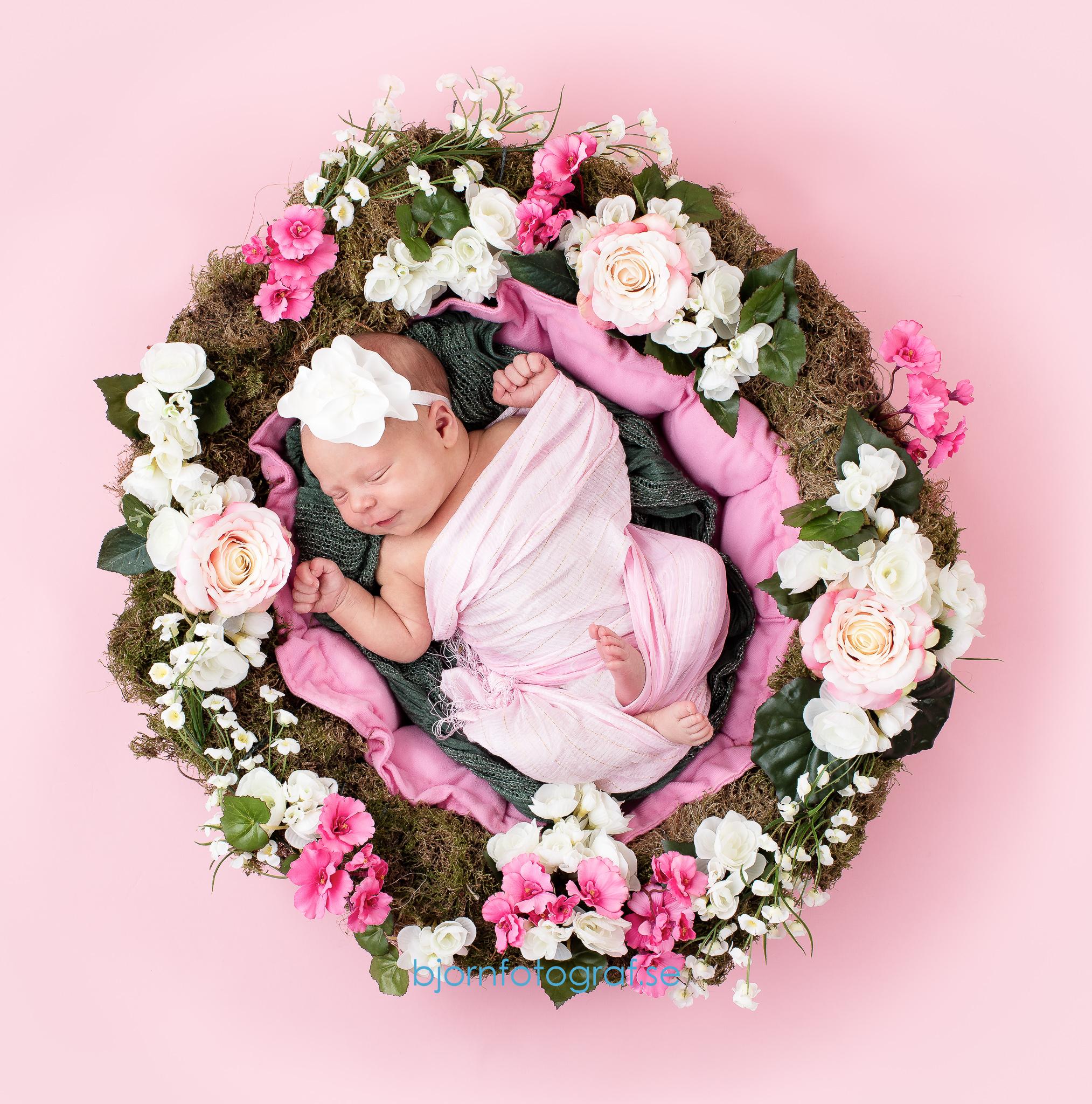 Nyföddfotograf Hornstull